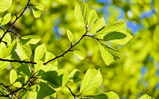 Drzewo dębu i jego gałęzie
